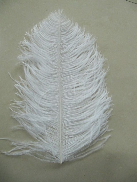 free shipping 22-24inch ostrich feather